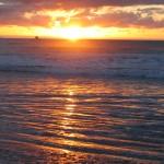 Kiwi Ex May Famil 257